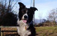 Le Unità Cinofile fondamentali in numerosi scenari, ogni anno decine di interventi sono risolti grazie all'addestramento e alla preparazione di cani e conduttori del CNSAS